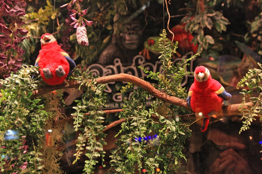 gal/Londres/Piccadilly_Circus/Rainforest_Cafe/IMG_1599.jpg